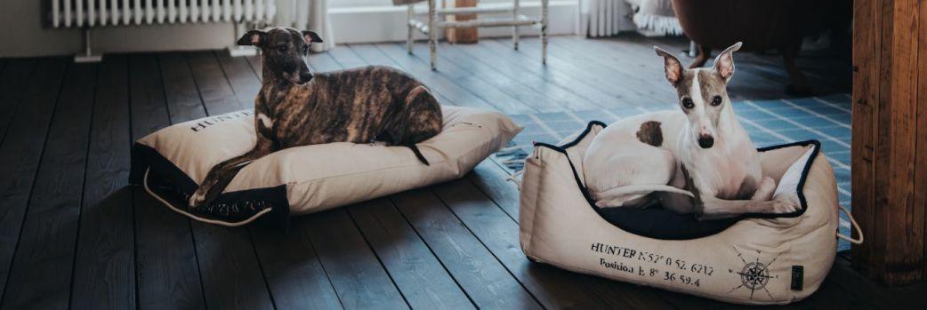 Przestrzeń dla kota i psa w mieszkaniu. Design z myślą o pupilach