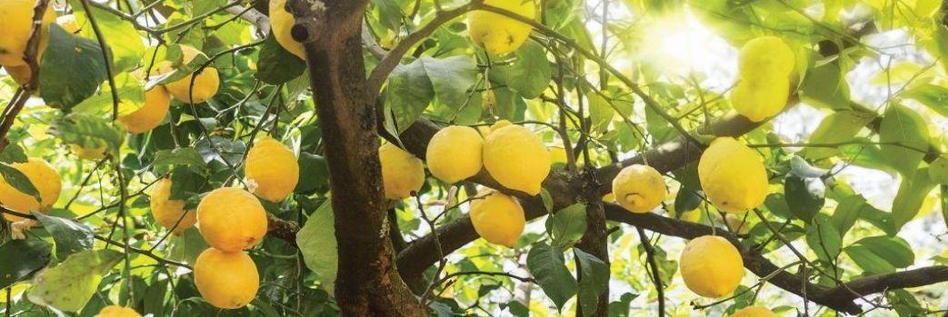 Egzotyczne rośliny i cytrusy