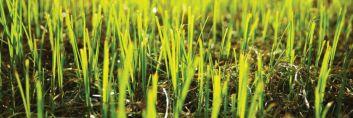 Od przygotowania gleby do ustawienia akcesoriów ogrodowych