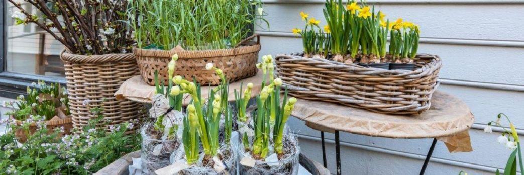 Świąteczny klimat na zewnątrz. Wielkanocne dekoracje ogrodu i balkonu