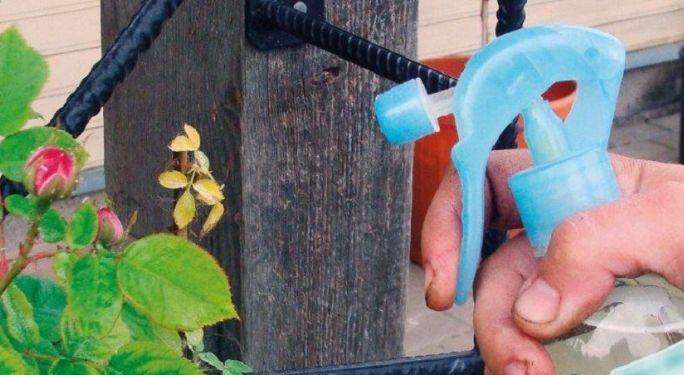 Jak poskromić ogrodowe szkodniki?