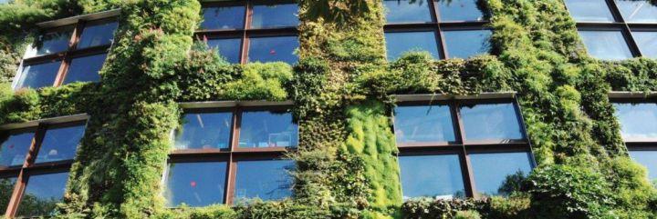 Zielone fasady