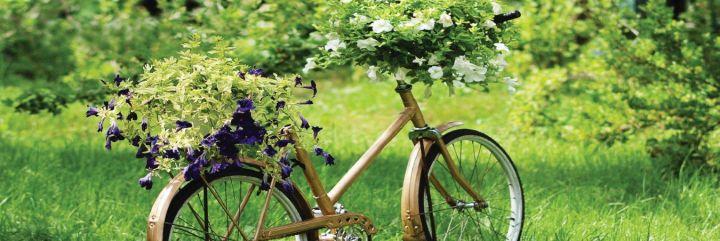 Podkreśl piękno kwiatów