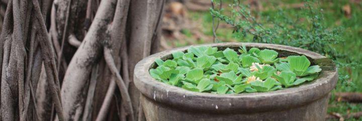 Kwiaty w ogrodzie według zasad feng shui