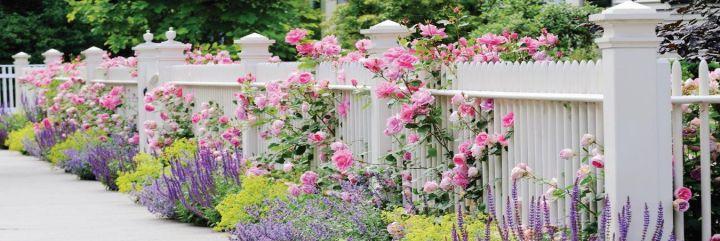 Mój ogród świadczy o... mnie