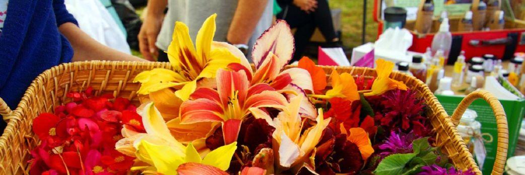 To była prawdziwa uczta dla kwiatożerców! Za nami V Kulinarny Festiwal Kwiatów Jadalnych
