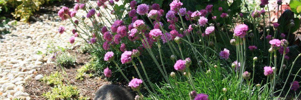 Tajemnica pięknego ogrodu