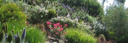 Jak urządzić ogród wielopoziomowy