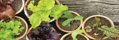 Dekoracyjne warzywa i zioła