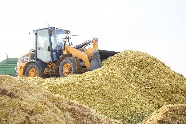 fakro uprawa biomasy