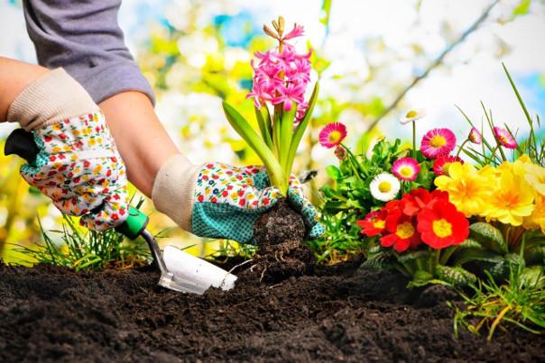 sadzenie kwiatów na wiosnę