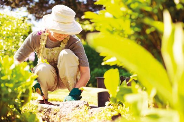 przycinanie krzewów w ogrodzie