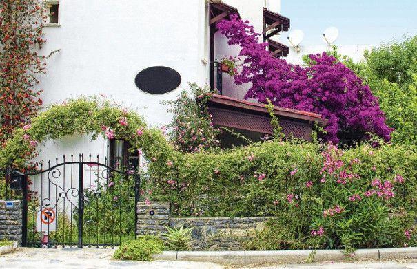 rośliny pnące przy ogrodzeniu