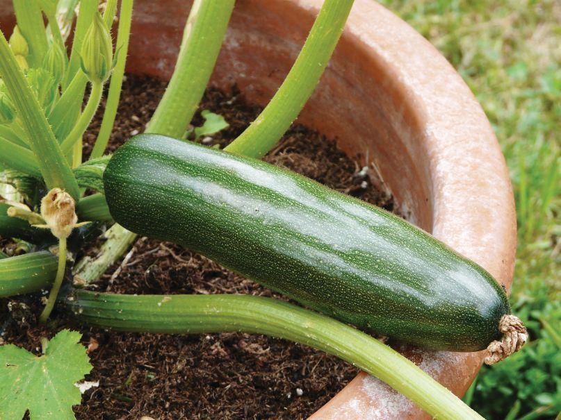 Dekoracyjne Warzywa I Zioła Praktyczny Ogród Livingroom24